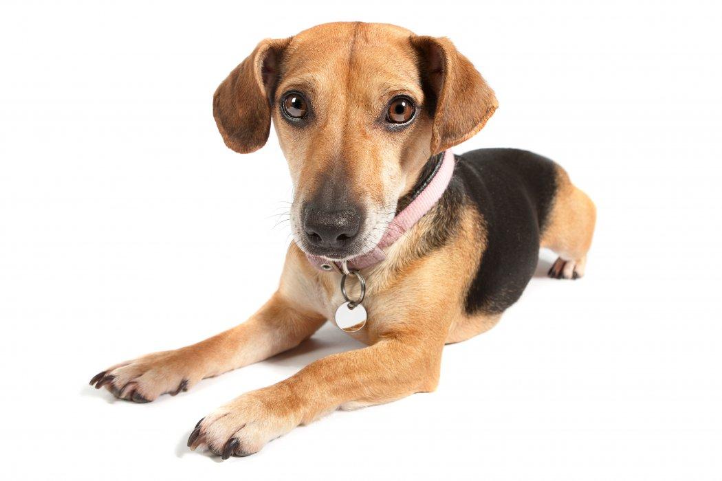 dog day care cobham and esher surrey