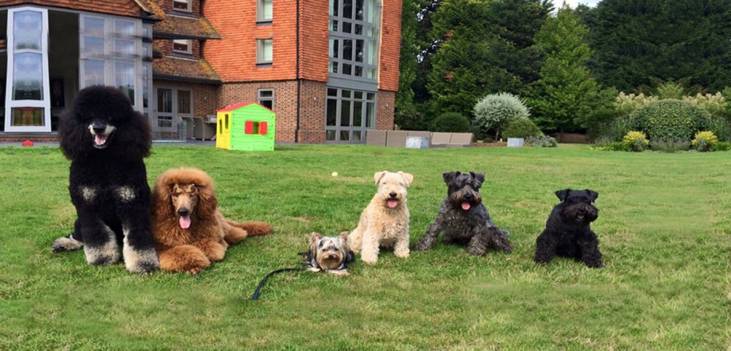dog day care Cobham Surrey