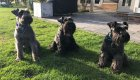 dog day care Cobham Surrey KT11