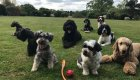 doggy day care Esher Surrey KT11