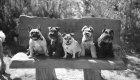 Dog Day Care Cobham Surrey