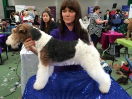 Amanda, qualified dog groomer, Cobham, Surrey