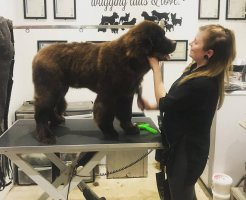 professional dog grooming salon Surrey
